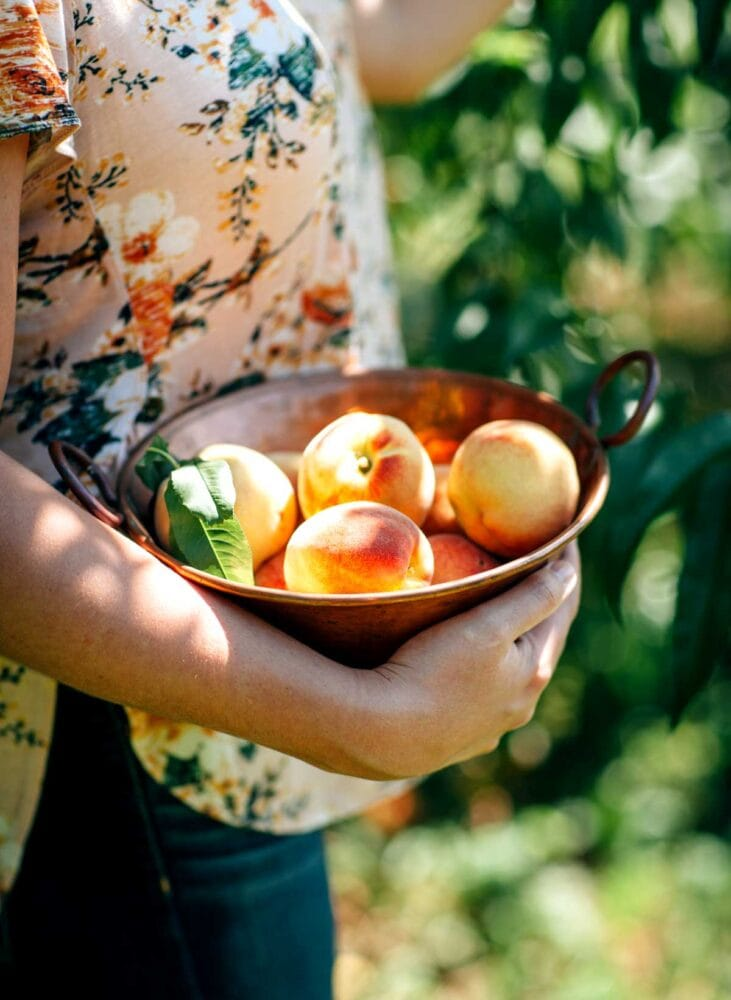 Bowl of freshly picked peaches to make a smoothie with