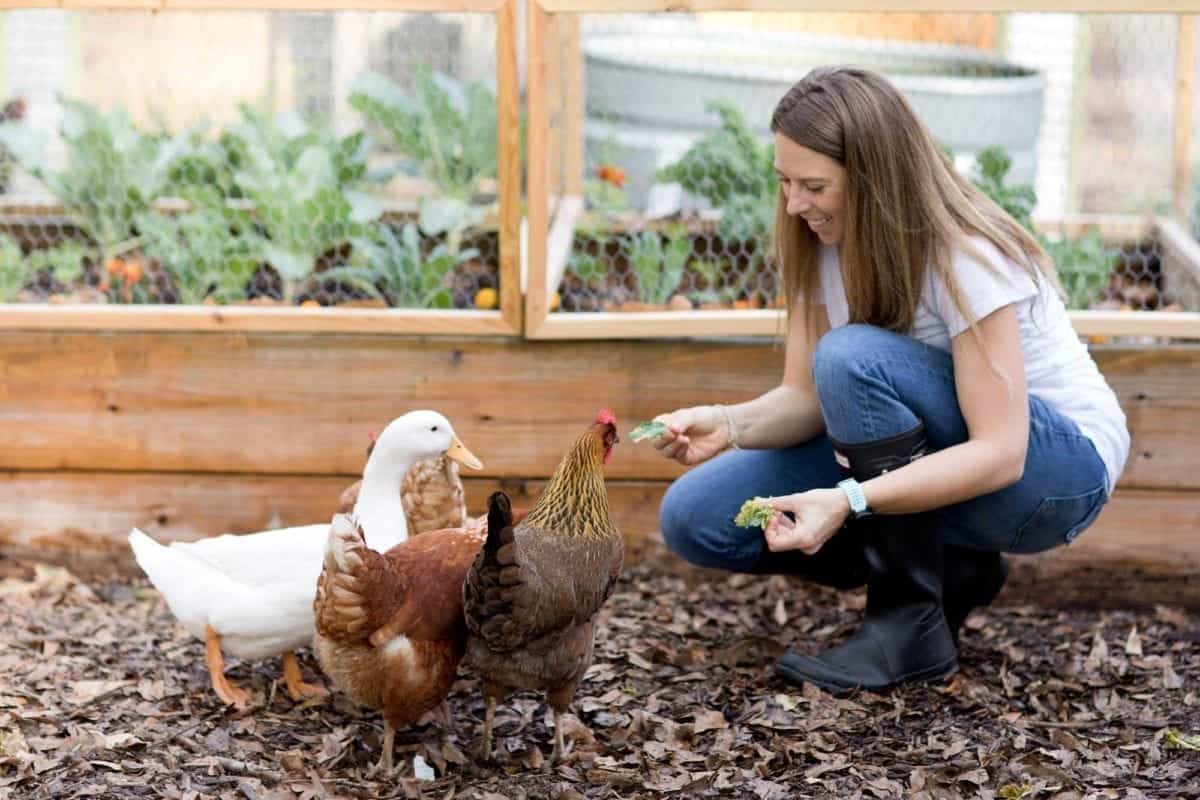 Best selling author Jen Hansard with her chickens and duck