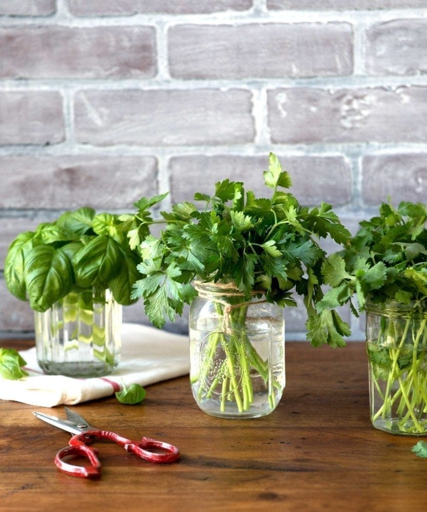 4 Best Detox Herbs For Green Smoothies