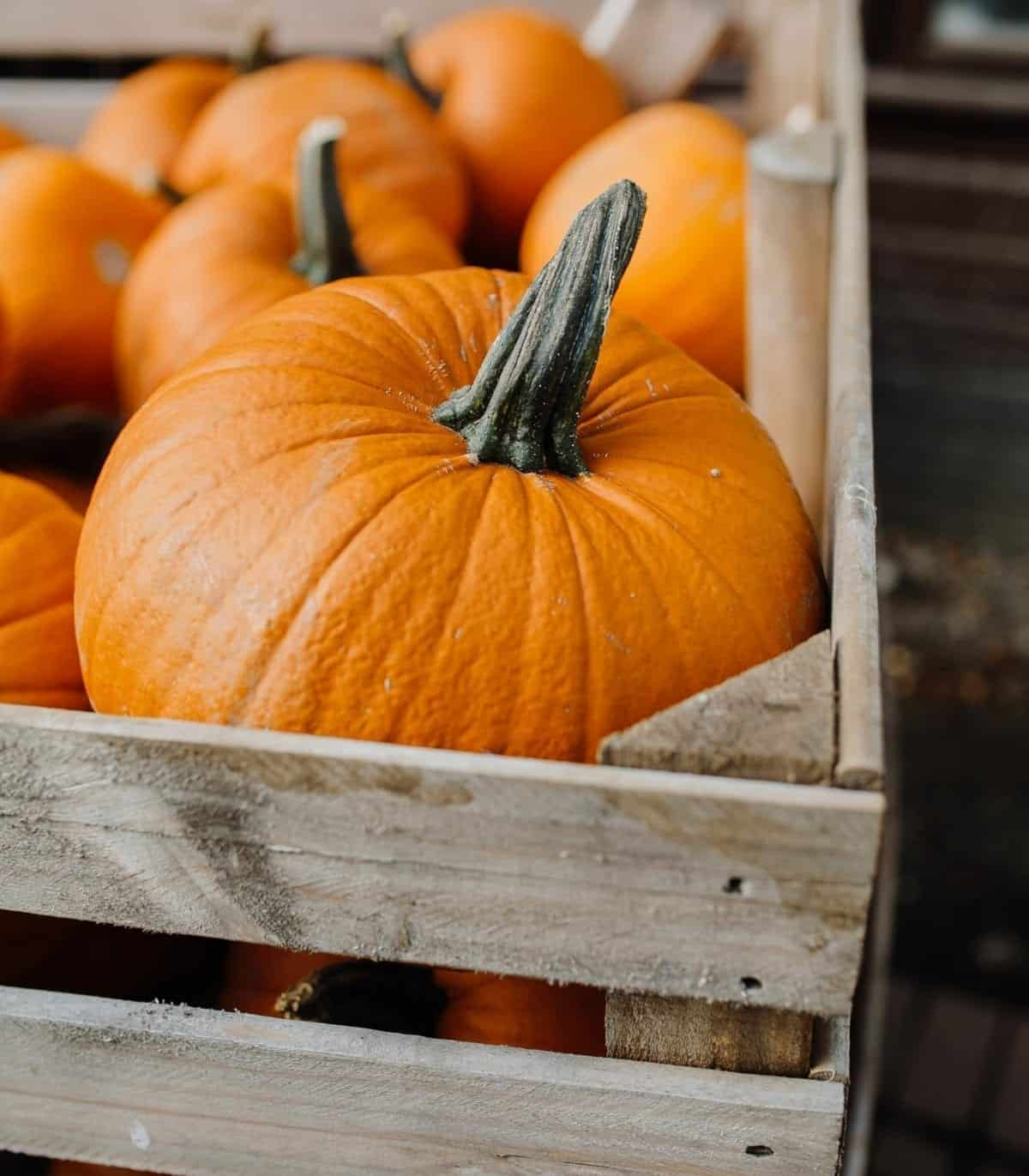 wooden crate filled with bright orange pie pumpkin benefits