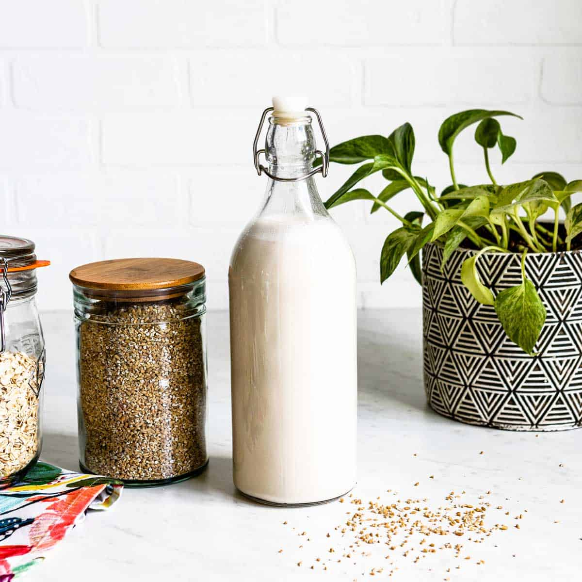 Plant-Based Recipes Collection