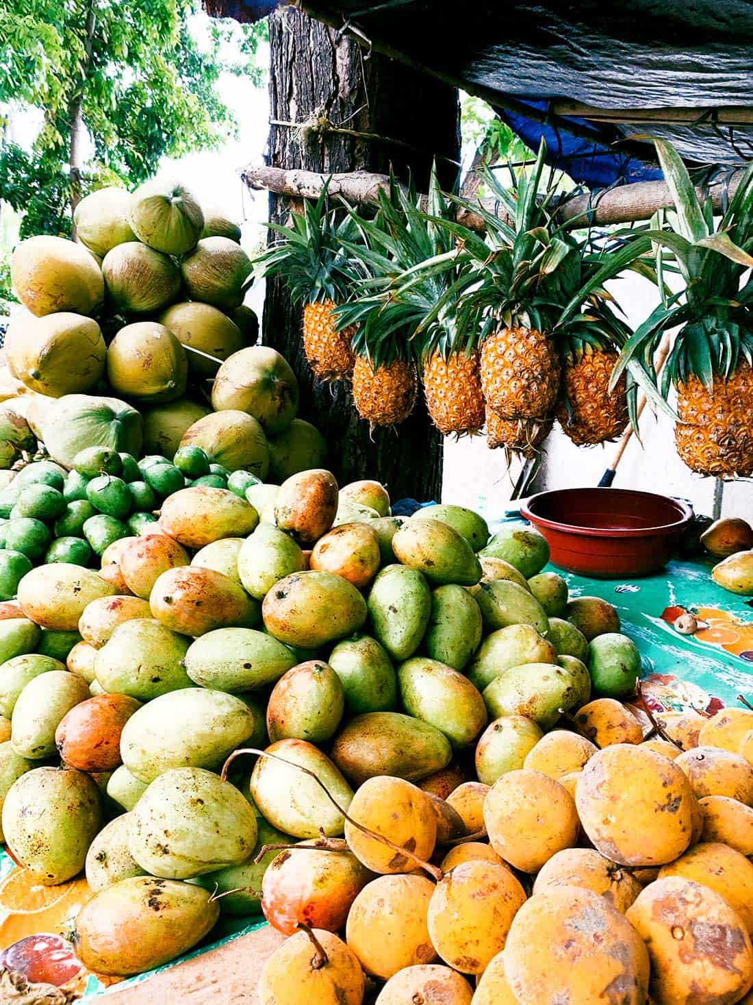 Tropical fruits ready for blending