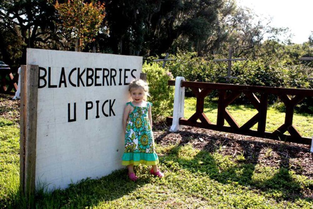 Clare picking blackberries for a smoothie
