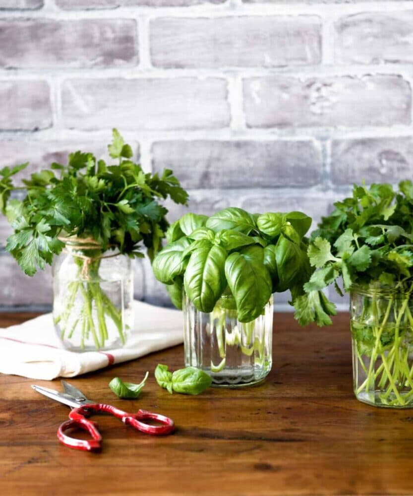 fresh herbs for vegan pesto