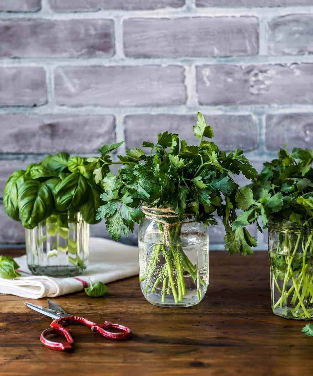 beautiful bouquets of herbs in mason jars ready to be used in the best detox tea. these herbs can also be used in detox tea for weight loss