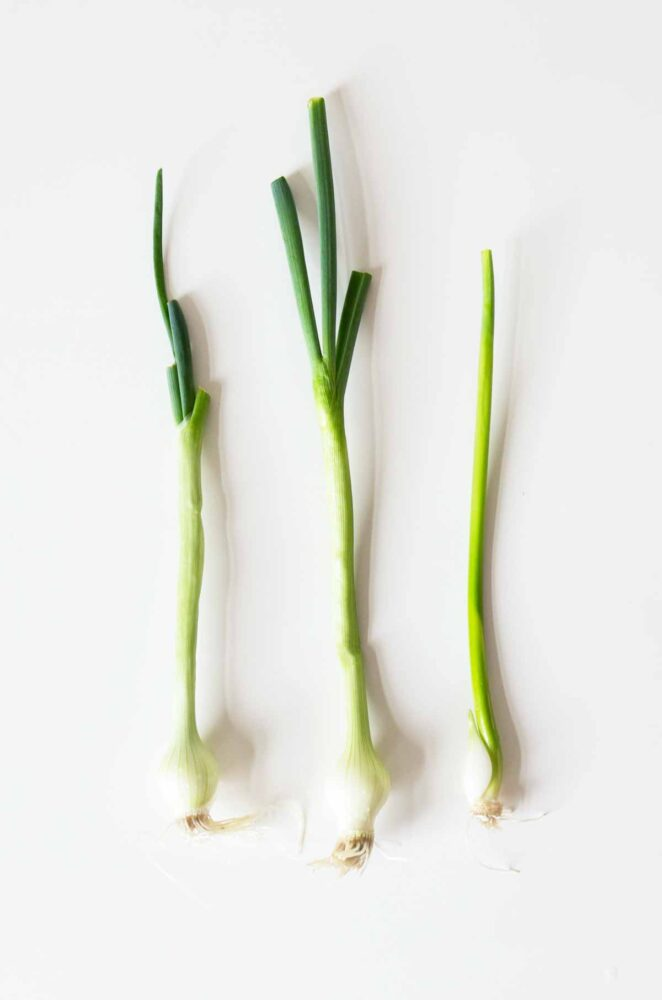 green onions are a perfect topping for a teriyaki bowl