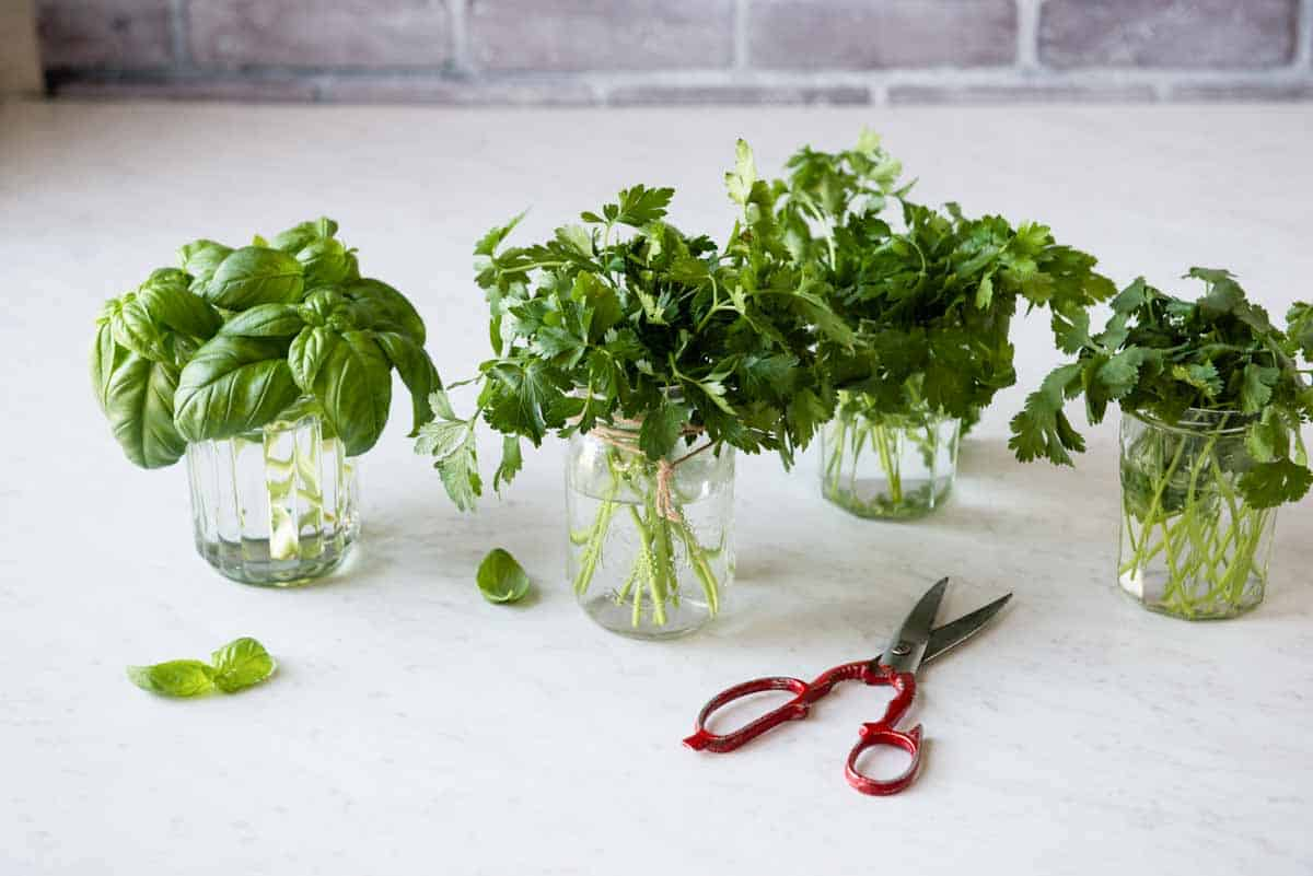 how to grow and store fresh herbs in mason jars